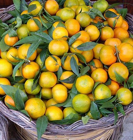 Agrumi di Calabria, azienda agricola 'a lanterna